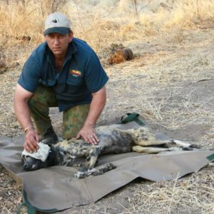 Painted Dog Conservation Incorporated